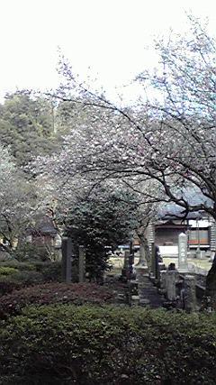 西福寺にて
