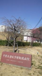 梅咲く庭で